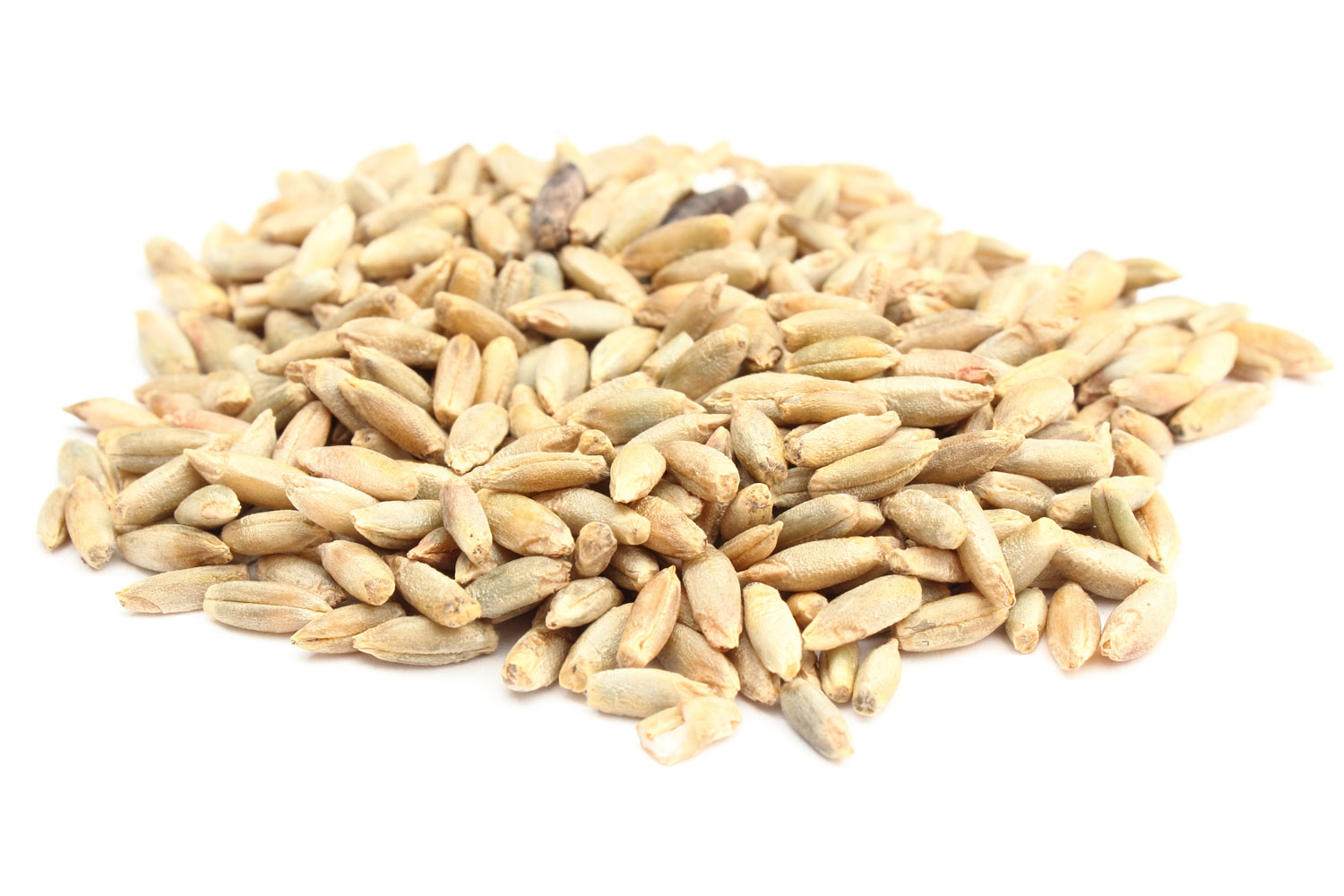 Rye Berries (10 pounds)