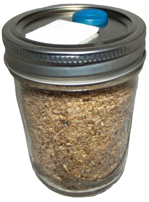 BRF JARS Brown Rice Flour Based Mushroom Substrate