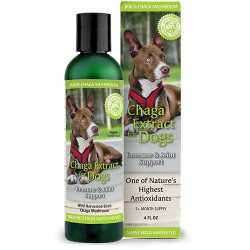 Chaga Extract For Dogs, 4oz