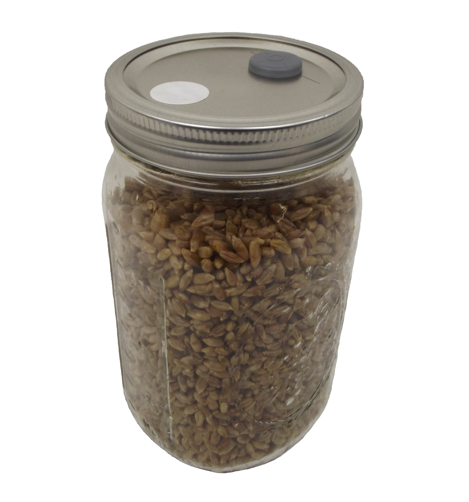 Sterilized Rye Berry Mushroom Substrate in Injectable Jar
