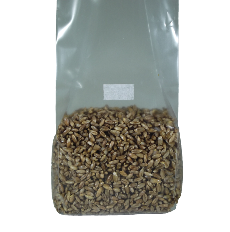 Sterilized Rye Berry Mushroom Substrate Bag Magic Mountain Rye