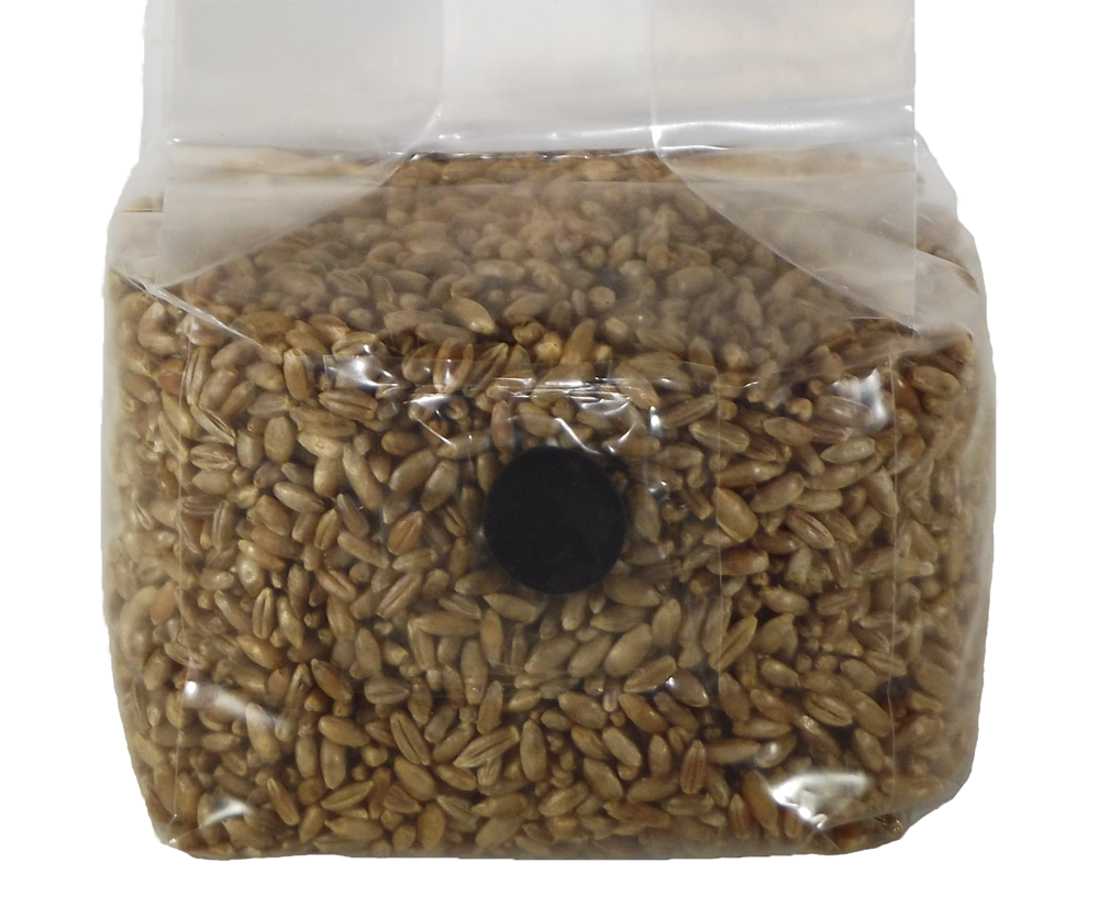 sterilized rye grain 4 pint jars mushroom substrate with injection port